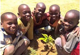 Tree-planting-concentrate